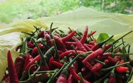 Việt Nam có 4 lô ớt và tôm xuất khẩu sang Úc bị dính chất cấm