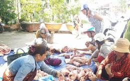 Tiền Giang: Lợn bệnh tả Châu phi chưa giảm, nhưng giá lợn gia tăng