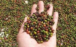 Ước tính xuất siêu của nông, lâm và thủy sản đạt hơn 6 tỷ USD