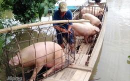 Giá lợn, gia cầm sẽ tiếp tục tăng