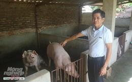 Một thôn có 20 hộ nuôi lợn vượt qua bão dịch