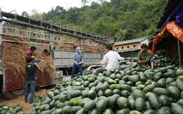 Vì sao xuất khẩu của Việt Nam sang Trung Quốc ngày càng giảm?