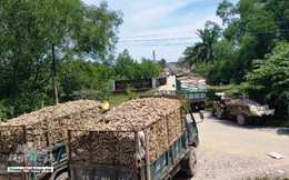 Thừa Thiên - Huế: Xe 'giăng' kín cổng nhà máy chờ nhập sắn