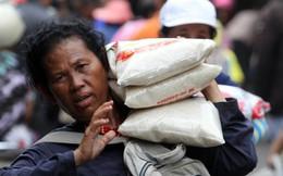 Giá gạo Thái cao ngất và cơ hội cho gạo Việt