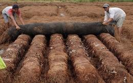 Không đốt rơm rạ, nông dân miền Tây hái ra tiền từ mớ rơm khô thế nào?