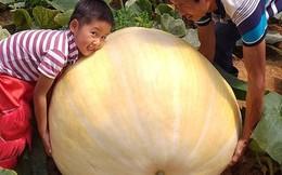 Ngắm bí ngô khổng lồ ở Đà Lạt sẵn sàng cho lễ Halloween