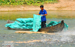 Hình ảnh từ vựa cá tra chế biến xuất khẩu sang Trung Quốc