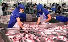 Ấn Độ có thể cạnh tranh với Việt Nam về xuất khẩu cá tra