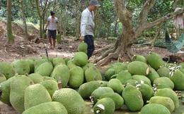 Trung Quốc siết nhập khẩu, hàng loạt nông sản Việt lại rớt giá mạnh