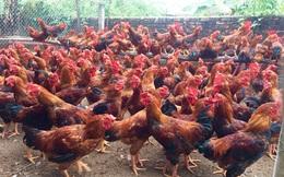 Thời cơ vàng tăng thị phần thịt gà
