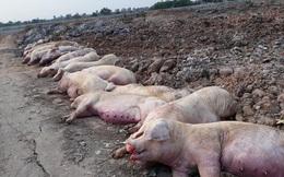 Tốn hơn 5.000 tỷ chống dịch, 6 triệu con lợn bị tiêu hủy