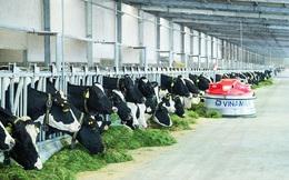 Vinamilk đủ điều kiện xuất khẩu một số sản phẩm sữa vào thị trường Trung Quốc