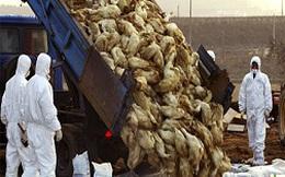 Trung Quốc mất 6,5 tỷ USD vì dịch cúm H7N9