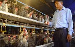 Người chăn nuôi trong nước không dùng chất cấm