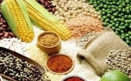 Giá lương thực trên thế giới vẫn tiếp tục giảm sâu