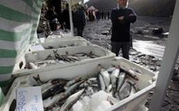 EU cấm nhập khẩu cá trích, cá thu từ quần đảo Faroe