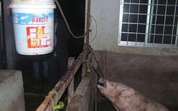 Kinh doanh thịt bơm nước sẽ bị phạt 3 triệu đồng