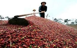 Châu Phi mê cà phê Việt