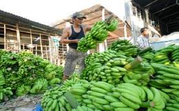 Nông sản thẳng tiến thị trường Trung Quốc