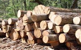 Ngừng cấp phép nhập khẩu gỗ nguyên liệu từ Campuchia