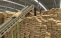 Thái Lan có thể trở lại ngôi vương xuất khẩu gạo?
