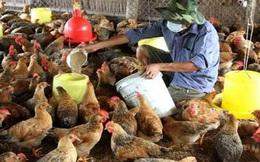 Chăn nuôi điêu đứng vì chống dịch yếu kém