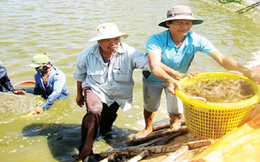 Xuất khẩu thủy sản: Nhiều thách thức mới