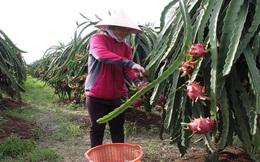 Nông sản xuất khẩu sang Trung Quốc: Cảnh giác với tin đồn