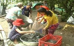Thủy sản nuôi được giá