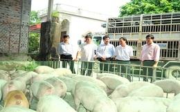Thị trường chăn nuôi về giá trị thực!