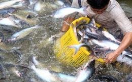 Khẩn thiết muốn đối thoại về nghị định cá tra