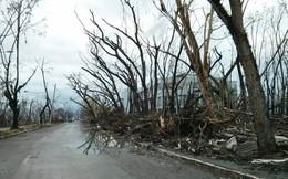 """2 tuần sau thảm họa, """"thành phố chết"""" Tacloban vẫn ngổn ngang"""