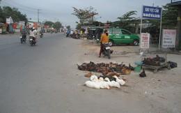 Cúm gia cầm bùng phát, chợ gà vẫn bán thoải mái