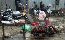 Ngành chăn nuôi trong nước căng mình đối phó với dịch