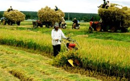 Nhìn lại 1 năm thực hiện tái cơ cấu nông nghiệp