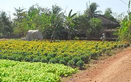 Đất nông nghiệp sẽ được xây dựng tạm
