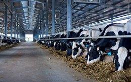 Hoàng Anh Gia Lai và Nutifood bắt tay sản xuất sữa tươi