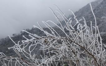 Miền Bắc rét đậm, vùng núi cao có khả năng xuất hiện băng giá