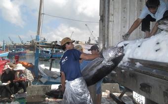 Xuất khẩu cá ngừ sang EU sẽ tăng 35% so năm 2016