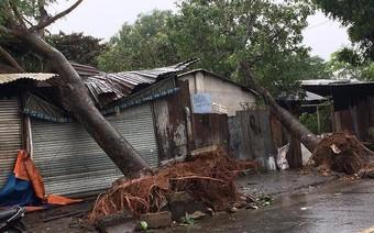 Ảnh hưởng bão, hàng loạt cây xanh ở TP.HCM bật gốc