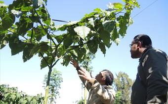 Người dân Lâm Đồng trồng được giống quả quý, giá tiền triệu