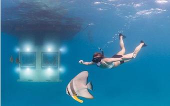 Trải nghiệm ngủ cùng cá tại những khách sạn dưới nước độc đáo nhất thế giới