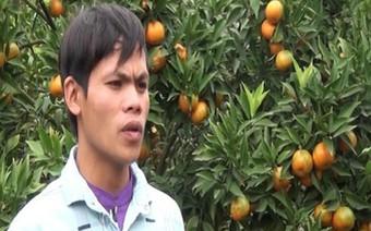 Chàng trai người Dao vượt khó làm giàu từ cây cam