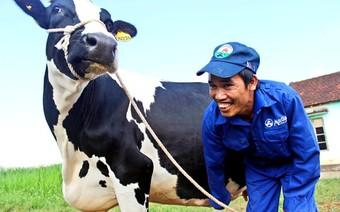Từ giấc mơ biến Mộc Châu thành đại nông trường đến… giấc mơ 100.000 con bò sữa
