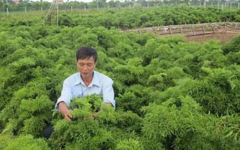 Từ công ty 10 tỷ đồng, DN này đã dựa vào cây thuốc cổ truyền như đinh lăng, đắng đất, xây dựng công ty hơn 28 triệu USD