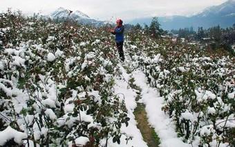 Cuối tuần miền Bắc đón đợt rét mạnh nhất đầu mùa, có nơi dưới 3 độ C