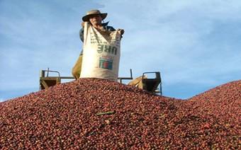 Xuất khẩu cà phê-không cẩn thận là mất hạng nhì
