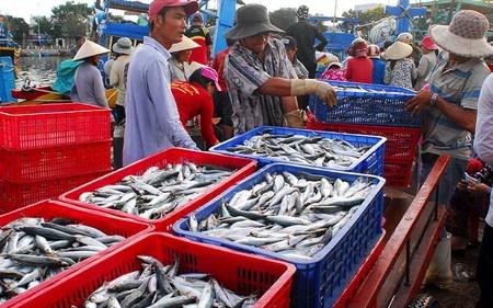 Báo động nguy cơ hải sản Việt bị phạt thẻ đỏ