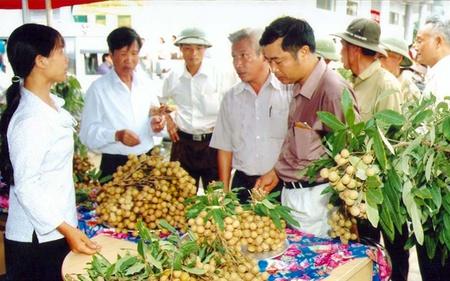 Nhãn Hưng Yên dự báo tăng giá, sản lượng giảm