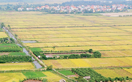 Khiếu nại tố cáo về đất đai còn rất phức tạp